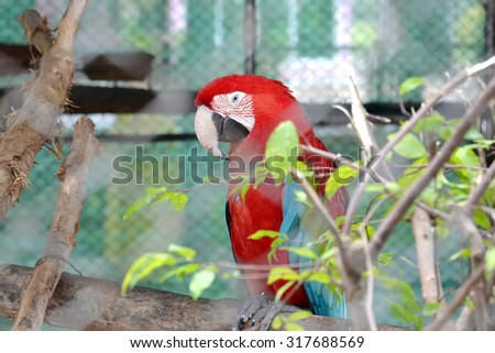 close up of parrot in cage - stock photo