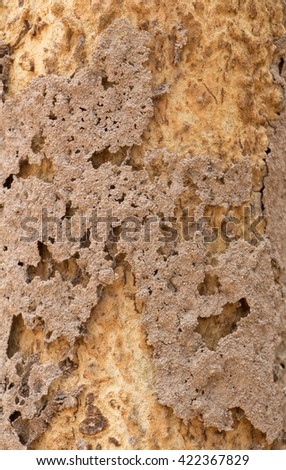 Close up of patchy colorful teak wood tree trunk texture. Nature background