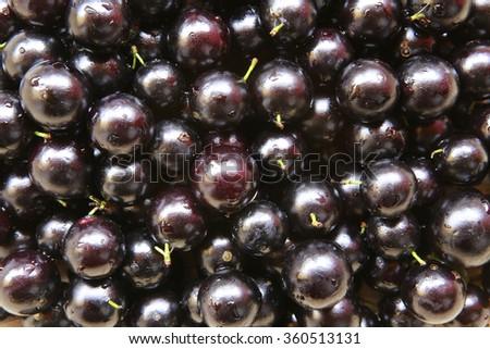 close up of pile of fresh plinia caulifora jabuticaba fruit - stock photo
