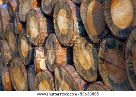 Close up of pile of logs in sunshine - stock photo