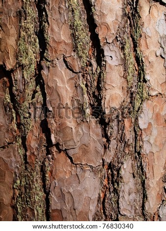 close up of pine tree bark - stock photo
