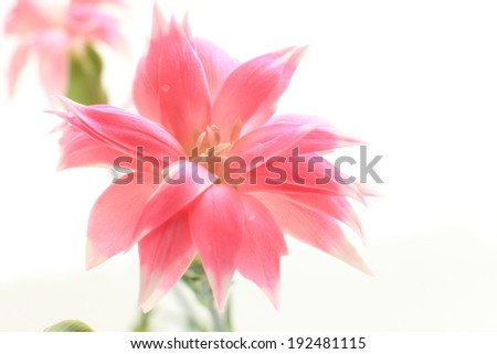 close up of pink blossom flower for spring background image