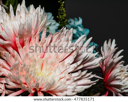 close up of pink flower and petals with soft lighting