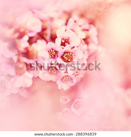 Close up of pink garden flowers. - stock photo