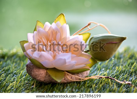 Close Up of Pink Lotus Water Lily Flower with Bud on Grass - stock photo