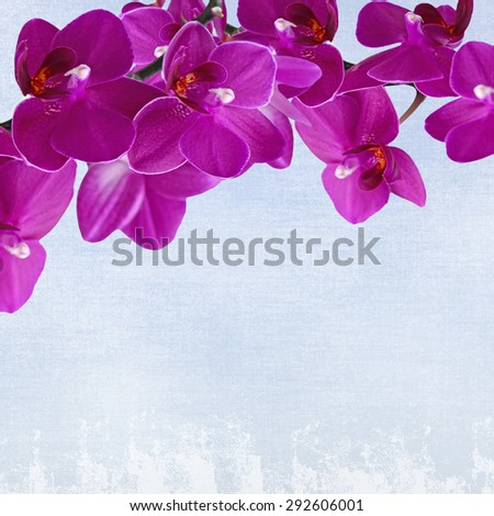 Close-up of pink orchid phalaenopsis. Bouquet of flowers orchids on grunge background - stock photo