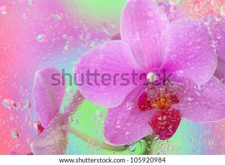 Close-up of pink orchid under wet glass