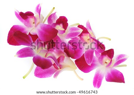 Close up of pink orchids. - stock photo