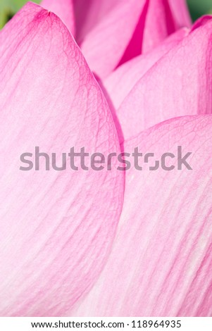 Close up of pink water lily. - stock photo