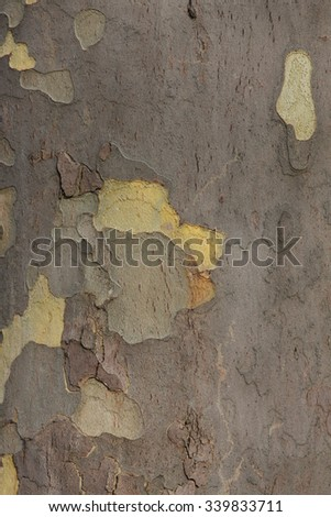Close up of plane tree bark as a background   - stock photo