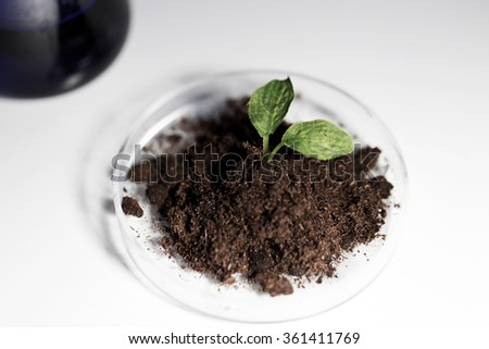 close up of plant and soil in lab - stock photo