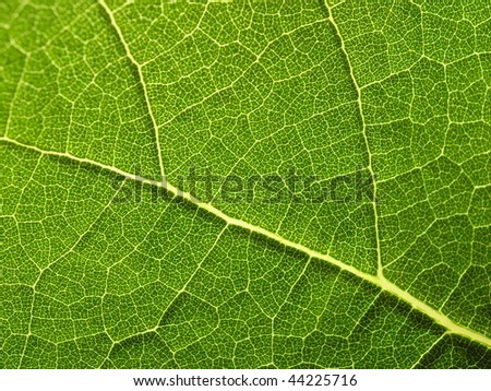Close-up of plant leaf.  Horizontally framed shot. - stock photo