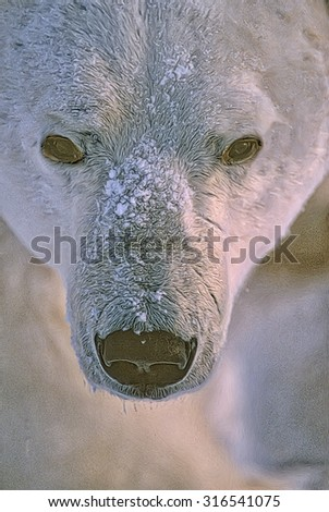 Close up of polar bear head,digital oil painting - stock photo