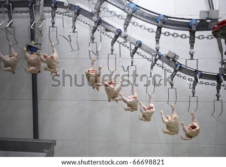 close up of poultry processing in food industry - stock photo
