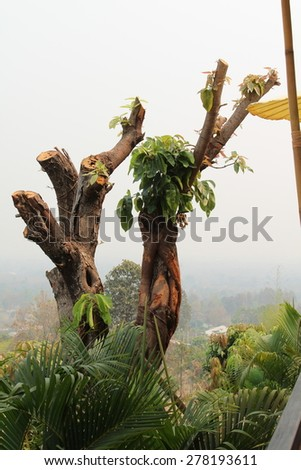 Close up of pruned tree and fresh shoots. - stock photo