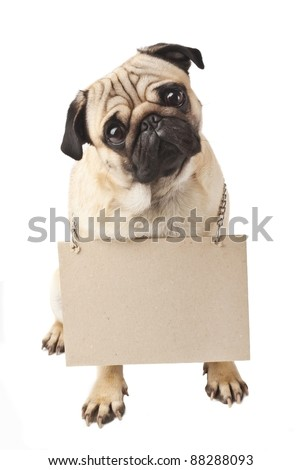 Close-up of Pug with a sign - stock photo