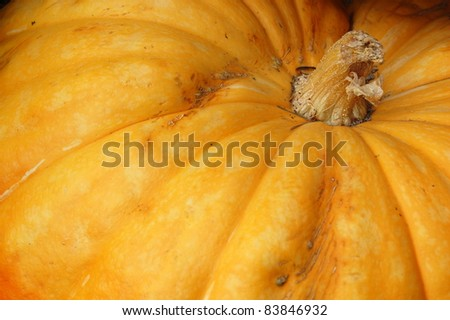 Close Up of Pumpkin. - stock photo