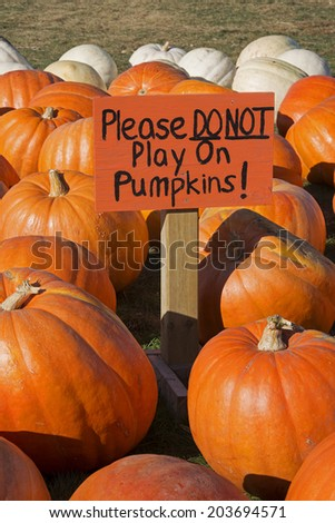 Close Up Of Pumpkins For Sale