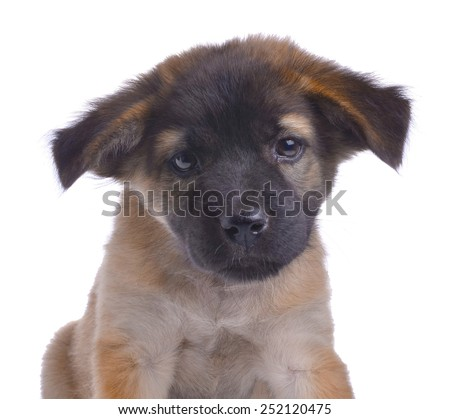 Close-up of puppy in front on white background - stock photo