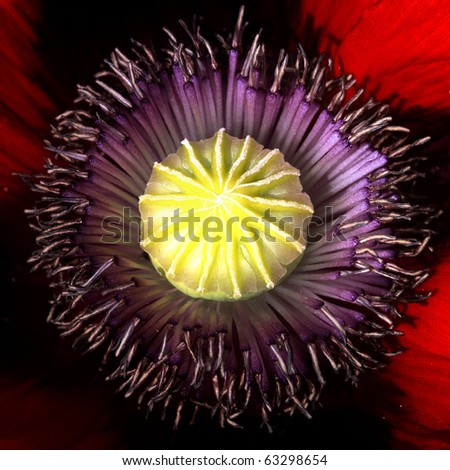 Close-up of purple and yellow flower - stock photo