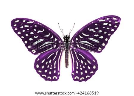 Close up of purple color Spotted Zebra (Graphium megarus) butterfly, dorsal view, isolated on white background with clipping path - stock photo