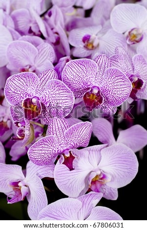 Close up of Purple Orchid Pile Together as Texture Background - stock photo