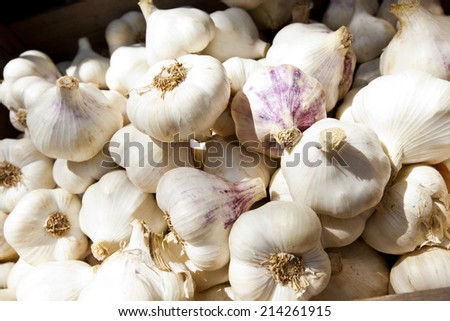 Close up of purple white garlic
