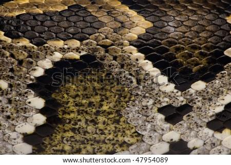 Close-up of Python regius' snakeskin - stock photo