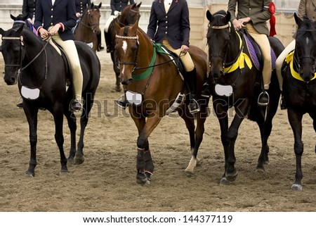 Close-up of Racehorses - stock photo