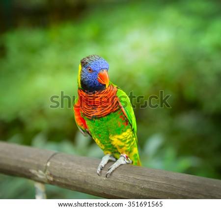Close up of Rainbow Lorikeet, selective focus. - stock photo