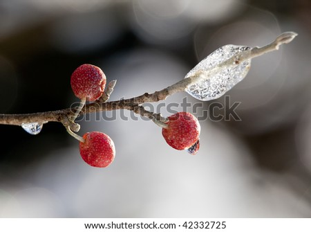 Close-up of red berry on twig in front of ice crystals