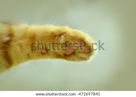 Close up of red cat's paw on a white background.