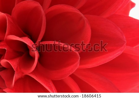 close up of red flower - stock photo