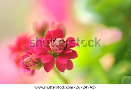 Close-up of red flower in the garden - stock photo
