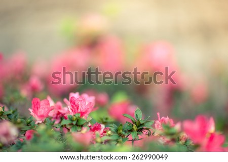 Close up of red flowers in a field