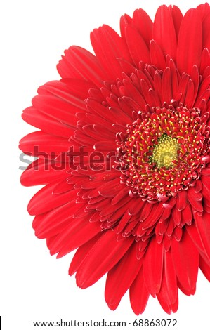 Close-up of red gerbera on white background.
