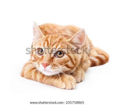 Close-up of red kitten isolated on a white background - stock photo
