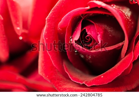Close up of red rose petal, vintage tone - stock photo