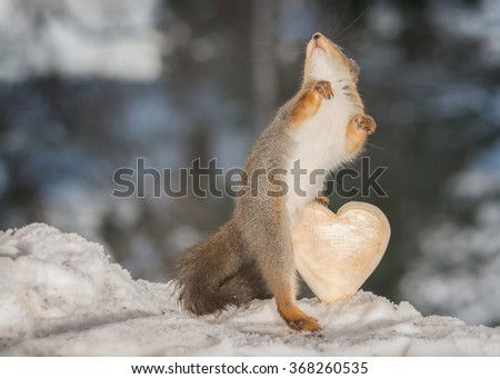 close up of red squirrel in a snow with a heart - stock photo