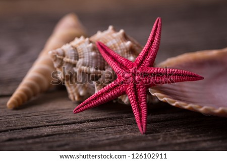 Close-up of red starfish seashell on old wooden board. - stock photo