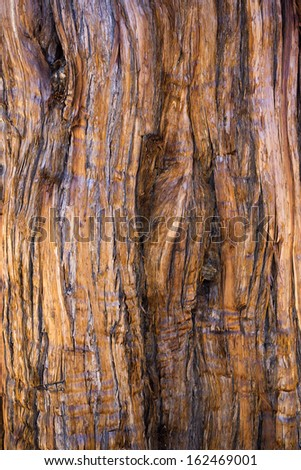 Close Up of Redwood Bark - stock photo
