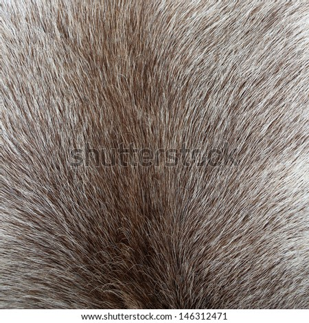 Close up of reindeer colored fur texture - stock photo