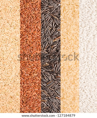 Close-up of rice variety from the world - stock photo
