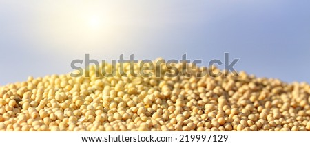 Close up of ripe soybean on heap after harvest - stock photo