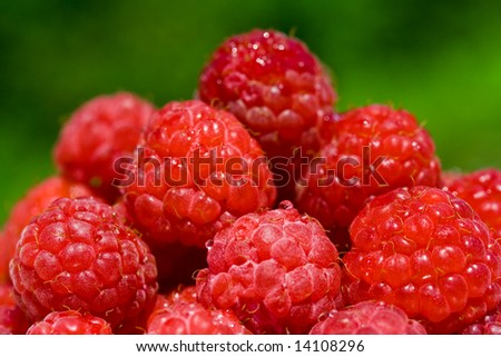 Close up of riped raspberries over green background