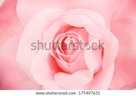 Close-up of rose
