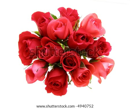 Close-up of rose flowers against white background - stock photo