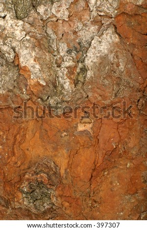 close-up of rotting wood