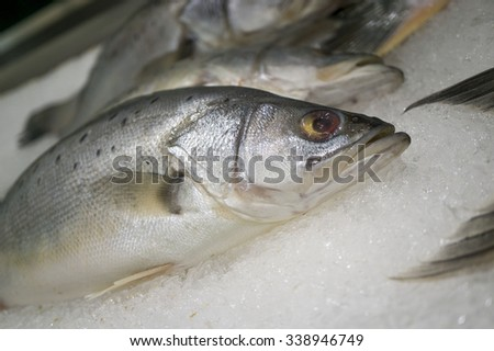 Close up of Salmon on Ice - stock photo