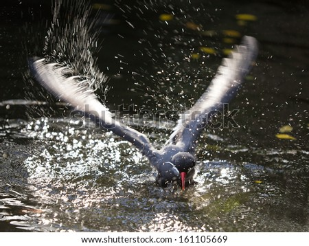 Close-up of Sea bird in a motion